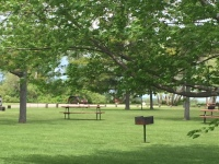 BBQ & Picnic Tables